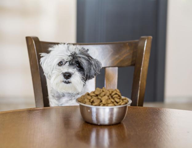 Alimentação saudável para o seu cachorro e gato